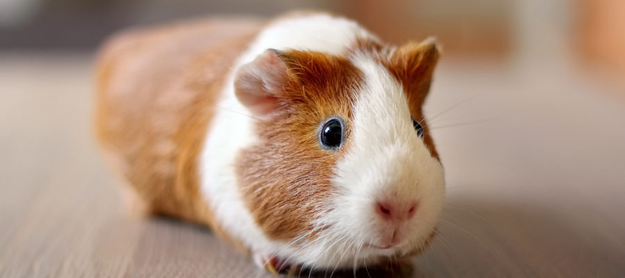 ARE CLINICAL TRIAL PARTICIPANTS REALLY HUMAN GUINEA PIGS